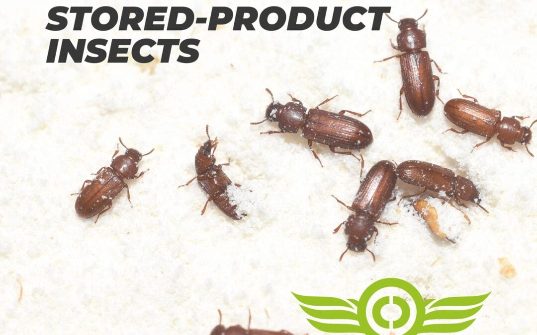 How to Get Rid of Stored Product Insects