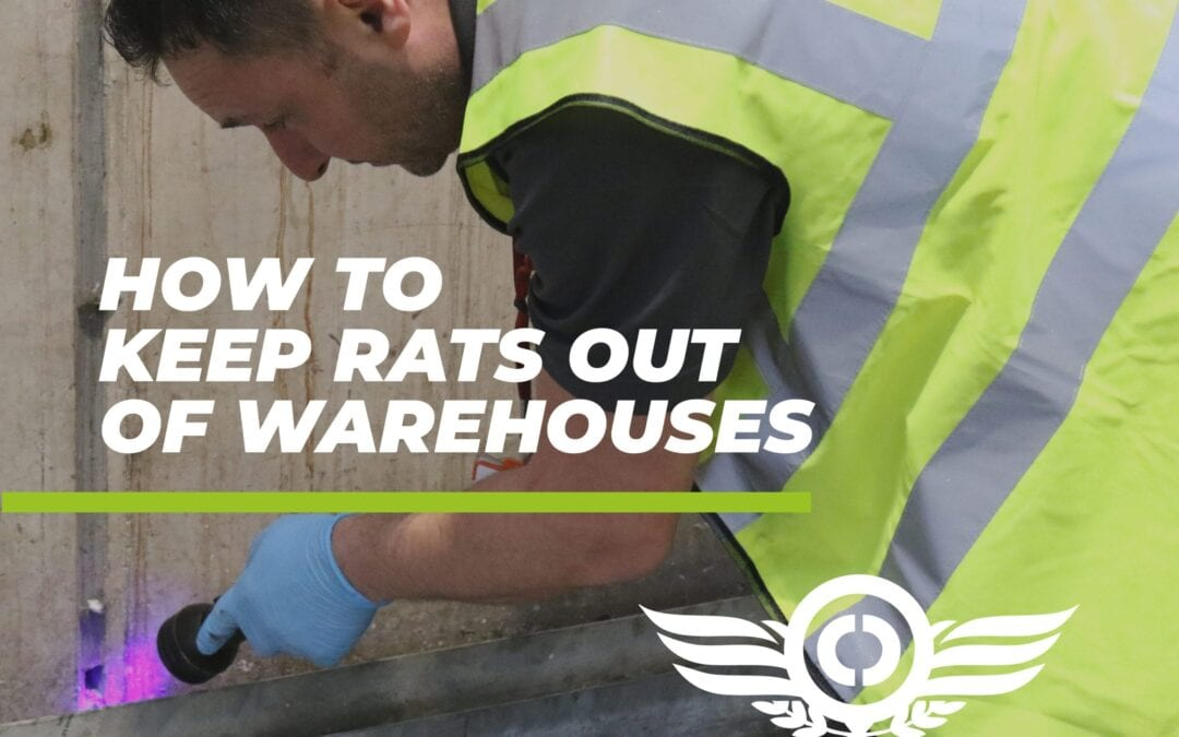 How to Keep Rats Out of Warehouses