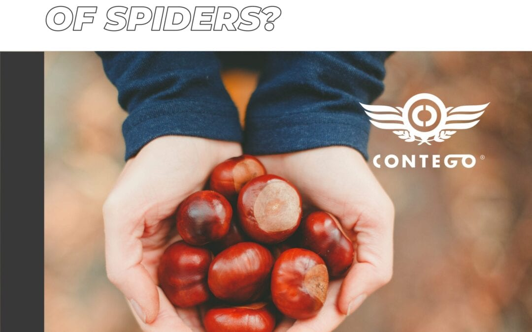 Urban Myth: Do Conkers Get Rid of Spiders?