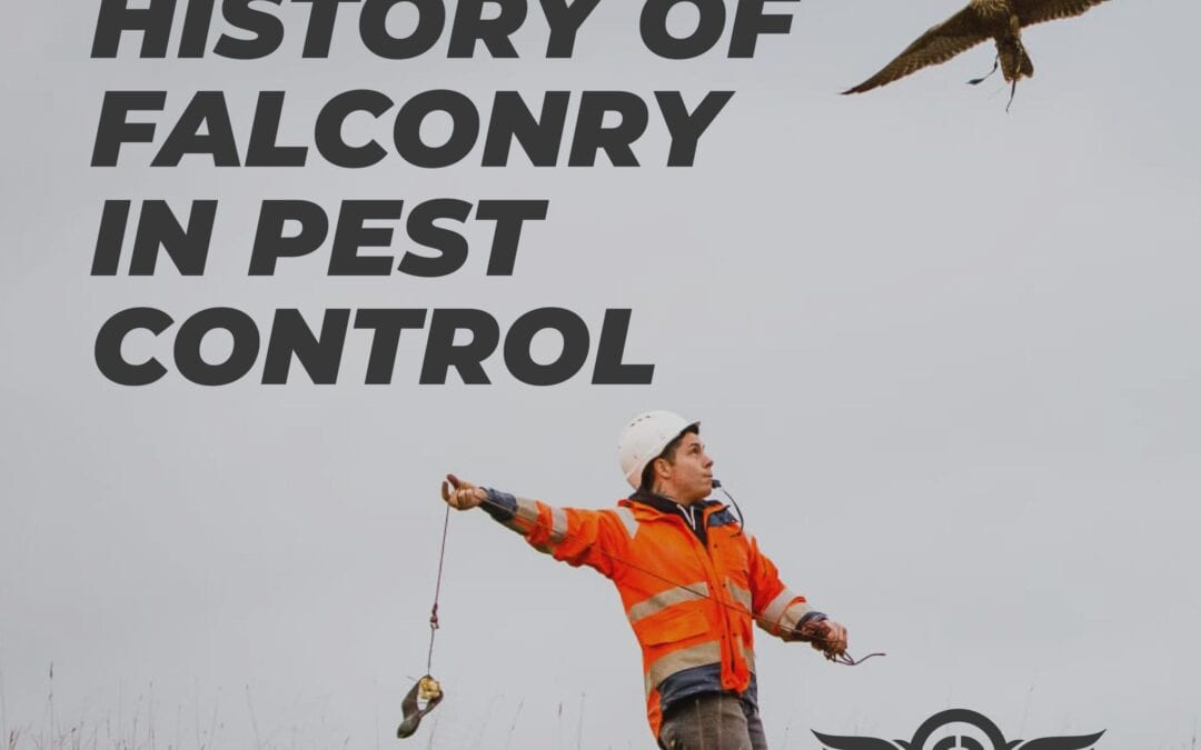 The History of Falconry in Pest Control